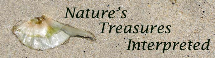 Nature's Treasures Interpreted header